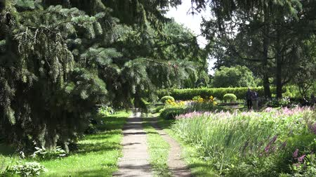 százszorszépek : scenery in the garden