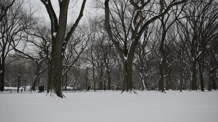 Panning HD Video of Trees in winter, Central Park with snow and Manhattan skyline, New York City