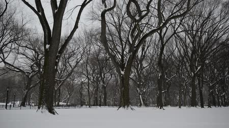 bos winter : Panning HD Video van Bomen in de winter, Central Park met sneeuw en de skyline van Manhattan, New York City