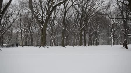 вихрь : Vertical Panning HD Video of Trees in winter, Central Park with snow and Manhattan skyline, New York City Стоковые видеозаписи