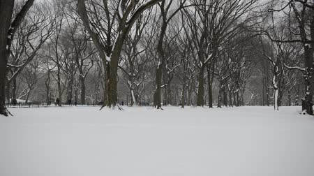 Vertical Panning HD Video of Trees in winter, Central Park with snow and Manhattan skyline, New York City Dostupné videozáznamy