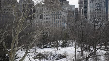 центральный : Panning HD Video of Trees in winter, Central Park with snow and Manhattan skyline, New York City