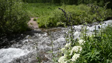 patak : Clear, clean water flowing in river with wildflowers Stock mozgókép