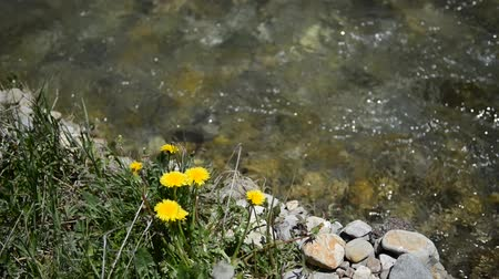 rzeka : Clear, clean water flowing in river with wildflowers Wideo