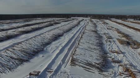The felled trees lie under the open sky. Deforestation in Russia. Destruction of forests in Siberia. Harvesting of wood. Wideo