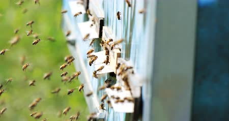 honey comb : Slow motion of Honey Bee flying around Beehive with blurred background. Beekeeping.