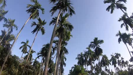 Video footage Palm trees on blue sky background . travel, summer, vacation and tropical.