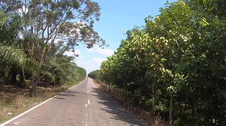 woodland : Video footage of car driving on a country road on a sunny day.