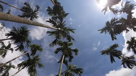 avuç içi : Video footage Palm trees on blue sky background . travel, summer, vacation and tropical.