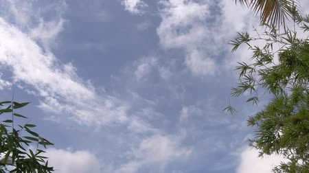 video footage ,green bamboo leaf , green tropical foliage texture blue sky and cloud background .