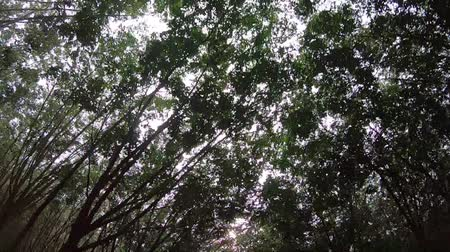 video footage ,Moving through the tunnel trees on a countryside sunny day. Vídeos
