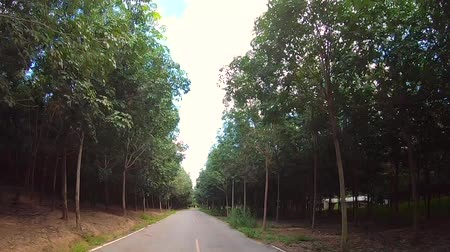 Video footage of car driving on a country road on a sunny day.  Vídeos
