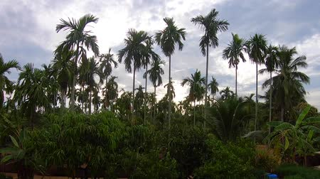 time lapse , Video footage Palm trees on blue sky background . travel, summer, vacation and tropical. Vídeos