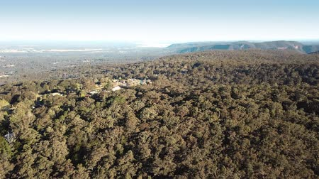 bushland : Bushland of the Blue Mountains National Park near Kurrajong Stock Footage