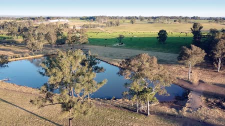 beef stock : Drone scenery of farmland and bush in the hawkesbury region of New South Wales, Australia. Water in the dam and cattle in the fields beyond.