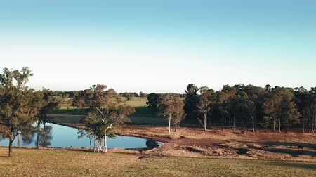 australian landscape : Flying low over a field at sunset on a farm in the bush. Rising up over a dam of water and cattle in the fields beyond. Aerial view of fields, a dam, and the bush at sunset in Australia Stock Footage