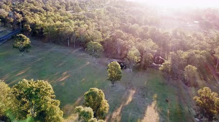 pastoral land : Wooded farmland in the bush at sunset. Lens flare and sun rays over forested bush land and farms in NSW, Australia