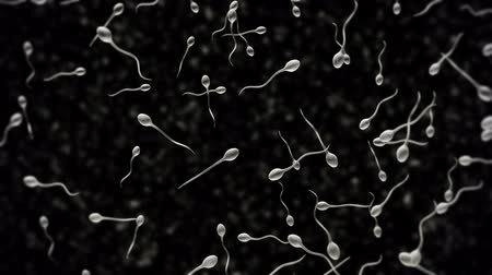 роды : Generated sperm animation.