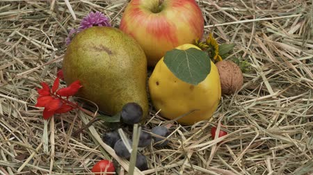 pigwa : Autumn fruits and flowers in the hay. Rotation Harvest of autumn fruits. Autumn Festival. Gifts of Autumn.