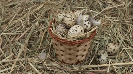 желток : Quail eggs in a basket on the hay. Rotation Diet product. Organic food. Homemade quail eggs close up view. Easter.