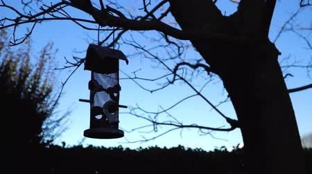 alimentador : Silver bird feeder swings in the wind