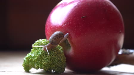lesma : Snail crawls over the red apple and green broccoli, cute animal, film background Vídeos
