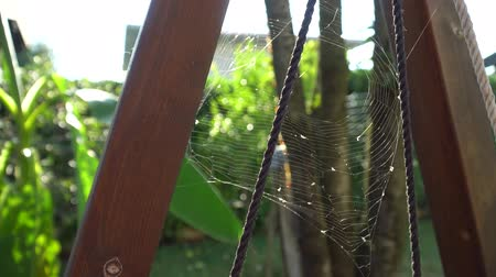 intricacy : Cobweb closeup on wind, beautiful spiders web