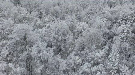 сейчас : Aerial footage of a white frosty and snowy forest in the middle of the winter.