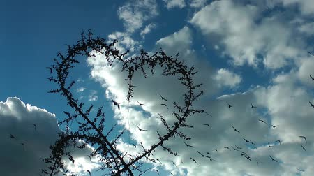 natural world : Heart Shape of Plant and Birds