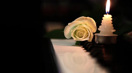 melodia : White Rose e Candleon Piano Keys Filmati Stock