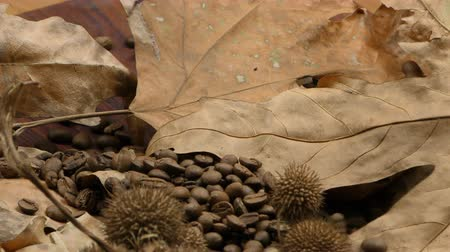 martwa natura : Roasted Coffee and Dry Leaves