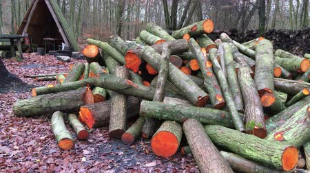 houtblokken : Cut Woods in Forest