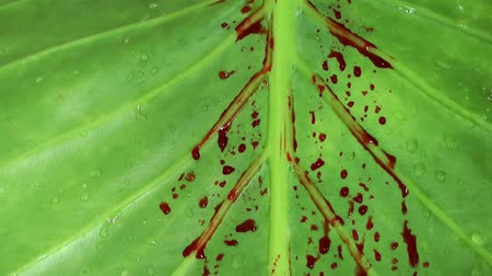 lyme disease : Blood on Green Leaves