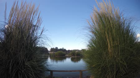 malaga : Reeds in Nature and Clear Sky Stock Footage