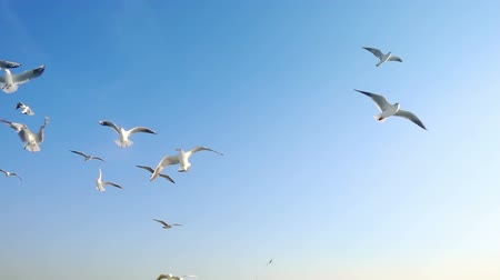 zametání : Bird Animal Seagulls Flying on Bright Blue Sky