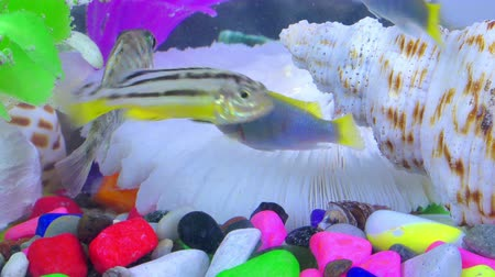 şnorkel : Fishes in Colorful Aquarium in Underwater Stok Video