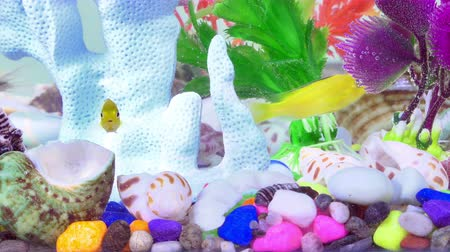 goldfish : Fishes in Colorful Aquarium in Underwater Stock Footage