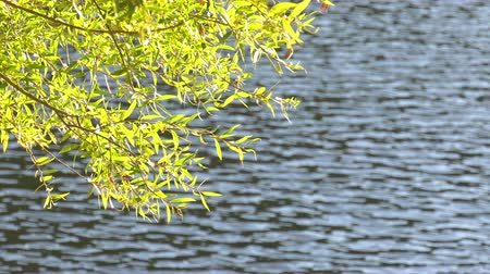 Tree Leaves and Lake Water