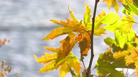 Leaves and Blurry Lake Behind Stock Footage