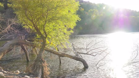 Tree Sunlight and Lake