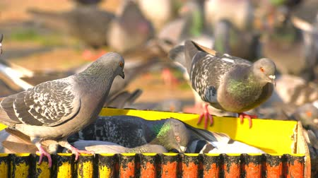Animal Birds Pigeons Eating