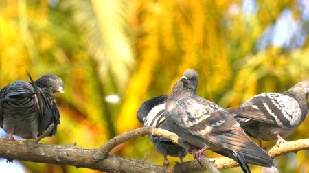 Animal Birds Pigeons on Tree Стоковые видеозаписи