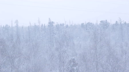 snowy background : endless northern primeval snowy dense dark forest above Arctic circle in Russia in light skyline