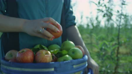 full bucket : slow motion woman carries big blue bucket full of fresh juicy red and green apples and puts one more red apple above Stock Footage