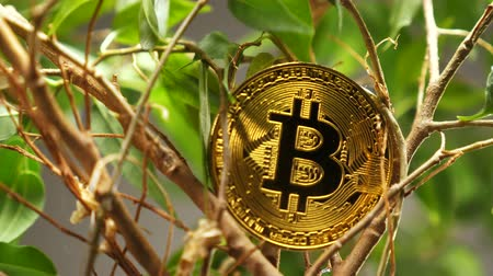 vantagem : real model on bushes made as virtual currency