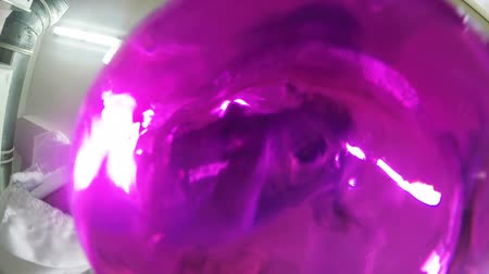 tornar : macro bottom view lab assistant shakes bulb and pink Stock Footage
