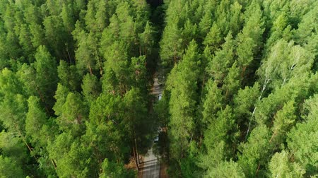 silvicultura : flight close above spruce tops showing traffic road on sunny day Stock Footage