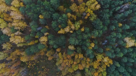 wood glade : camera rotates over autumn wood with glades and ashes Stock Footage