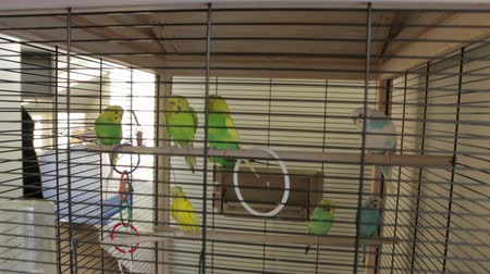 cativeiro : The Green Parrots Cage