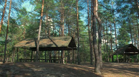 kamp : A Gazebo In The Forest Stok Video